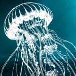 """""""As águas-vivas não sabem de si"""", Aline Valek"""